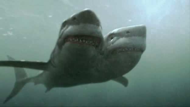 Visión del tiburón de dos cabezas, amenazador como él sólo.